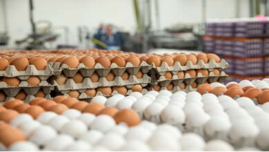 MoCI Succeeds In Solving Egg Crisis