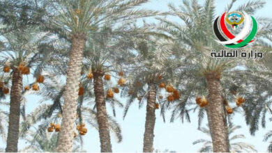 Auction For The Sale Of 4,200 Fruitful Palm Trees