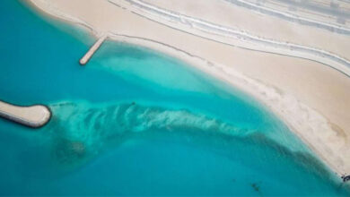 Kuwait's Marine Environment Enjoys Official Attention